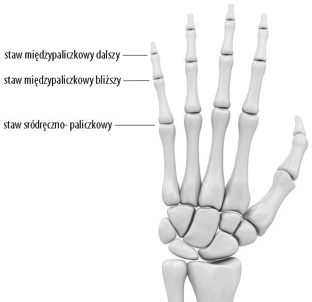 stawy dłoni