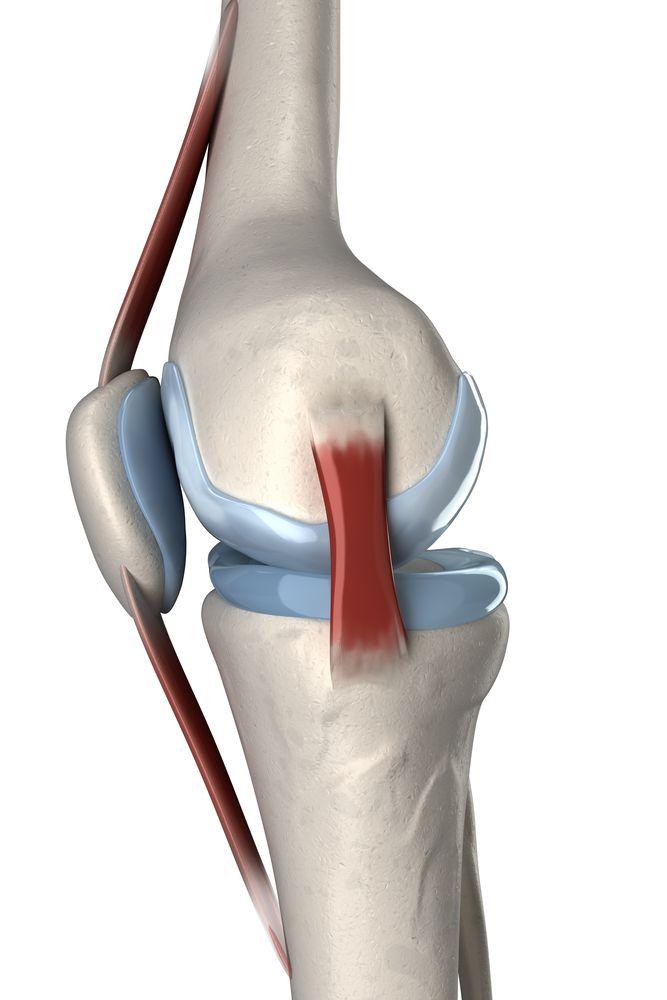 Anatomia kolana - widok boczny