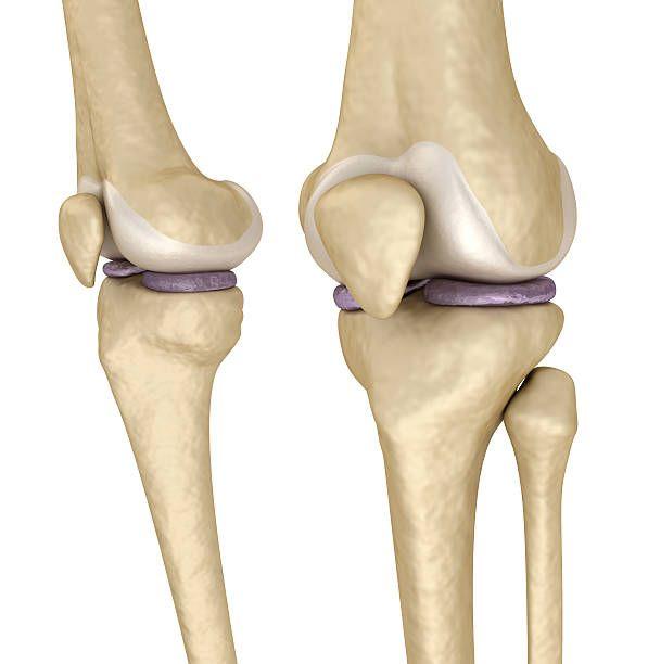 staw kolanowy-kości