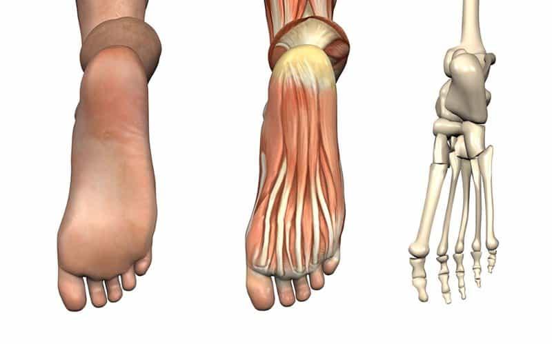 konstrukcja stopy
