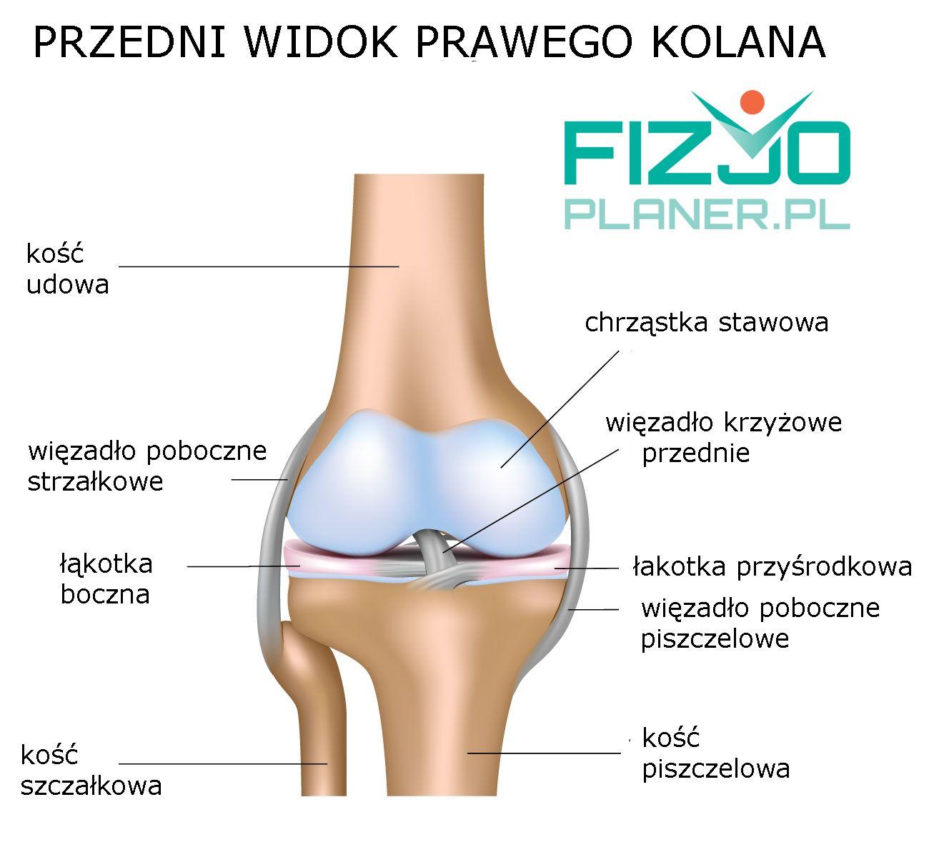 Anatomia stawu kolanowego