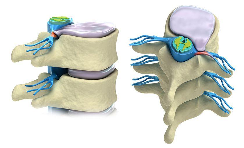 budowa kręgosłupa