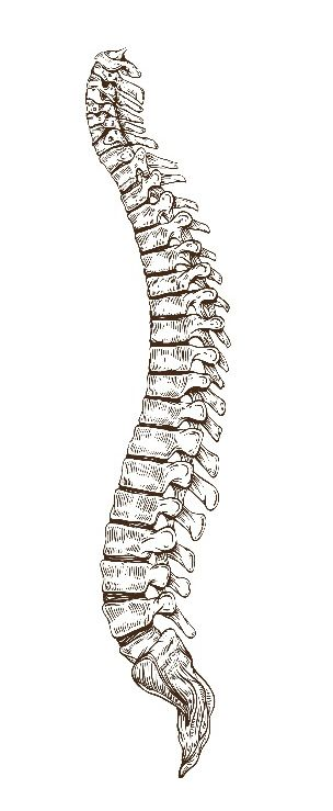 krzywizny kręgosłupa w płaszczyźnie strzałkowej