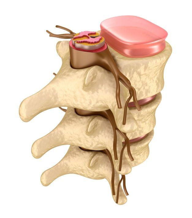 anatomia kanału kręgowego