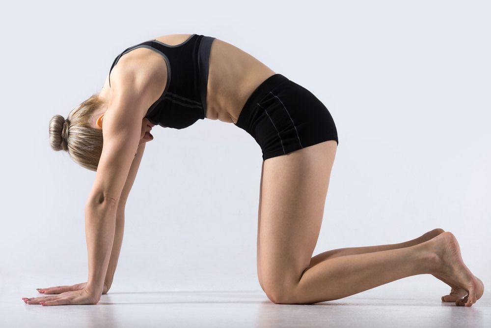 gimnastyka kręgosłupa - koci grzbiet