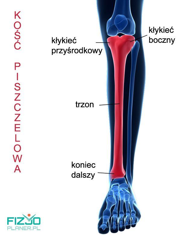 Anatomia kości piszczelowej